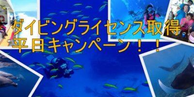 夏のダイビングライセンス取得平日キャンペーン