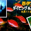 田子ダイビング&イカ祭り