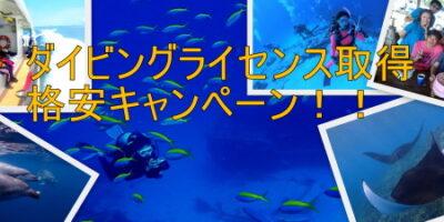 ダイビングライセンス(Cカード)取得 オフシーズンの格安キャンペーン!