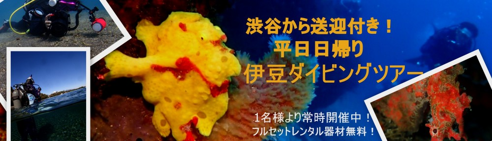 平日開催!渋谷から送迎付き日帰り伊豆ダイビングツアーのご案内