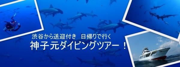 田子ダイビングツアー2020/6/10(水)