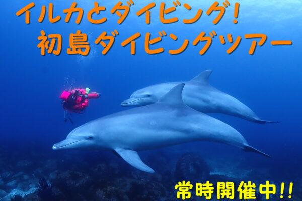 イルカとダイビング!日帰り初島ダイビングツアー