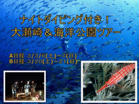ナイトダイビング付き!|伊豆海洋公園&大瀬崎潜り放題ツアーのご案内