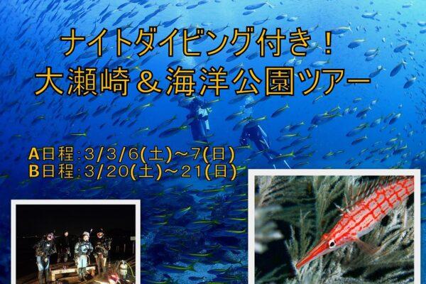 平沢ダイビングツアー2021/1/31(日)