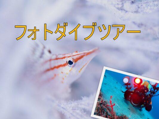 フォトダイブツアー|水中写真を楽しもう!