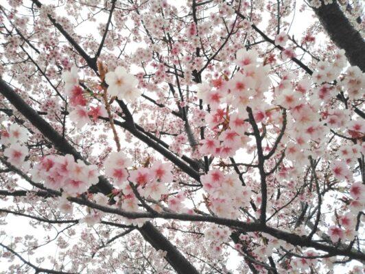 初島ダイビングツアー2021/2/13(土)