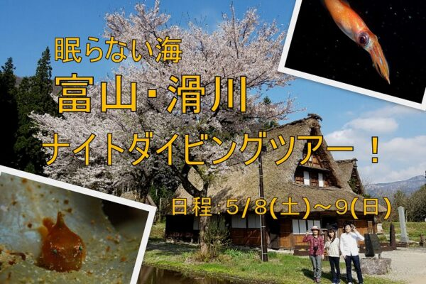 神子元ダイビングツアー2021/1/16(土)