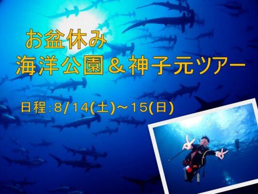 お盆休み 伊豆海洋公園&神子元ダイビングツアーのご案内