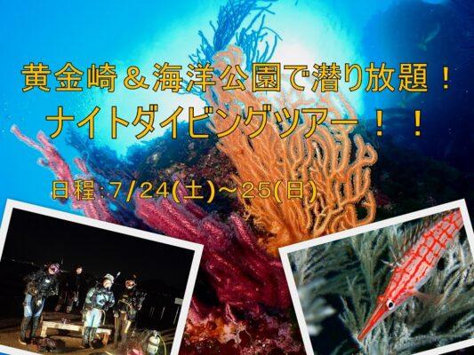 ナイトダイビング開催 伊豆海洋公園&黄金崎潜り放題ツアーのご案内