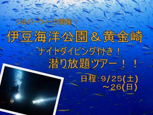 ナイトダイビング開催|黄金崎&伊豆海洋公園潜り放題ツアー