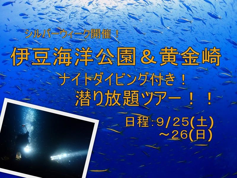 ナイトダイビング開催 黄金崎&伊豆海洋公園潜り放題ツアー