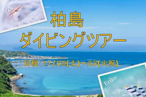 黄金崎&伊豆海洋公園ダイビングツアー2021/7/24(土)~25(日)