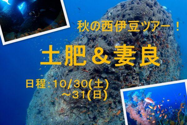 浮島ダイビングツアー2017/2/15(水)
